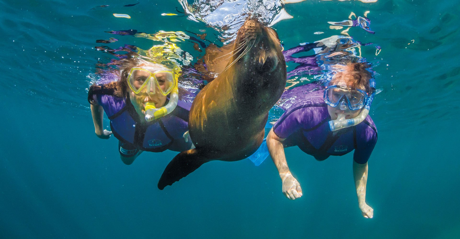 Small Ship Voyages Book Luxury Cruises with Lindblad National Geographic Cruises - Experience Wildlife
