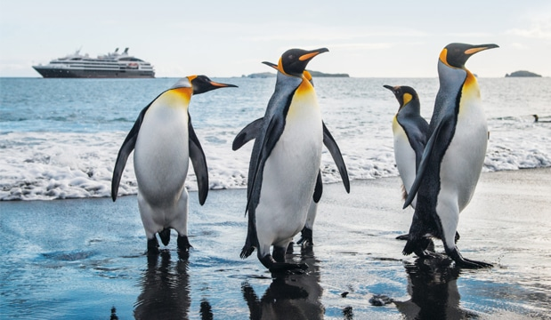 Small Ship Voyages Book Luxury Cruises with Ponant Cruises - the arctic penguins