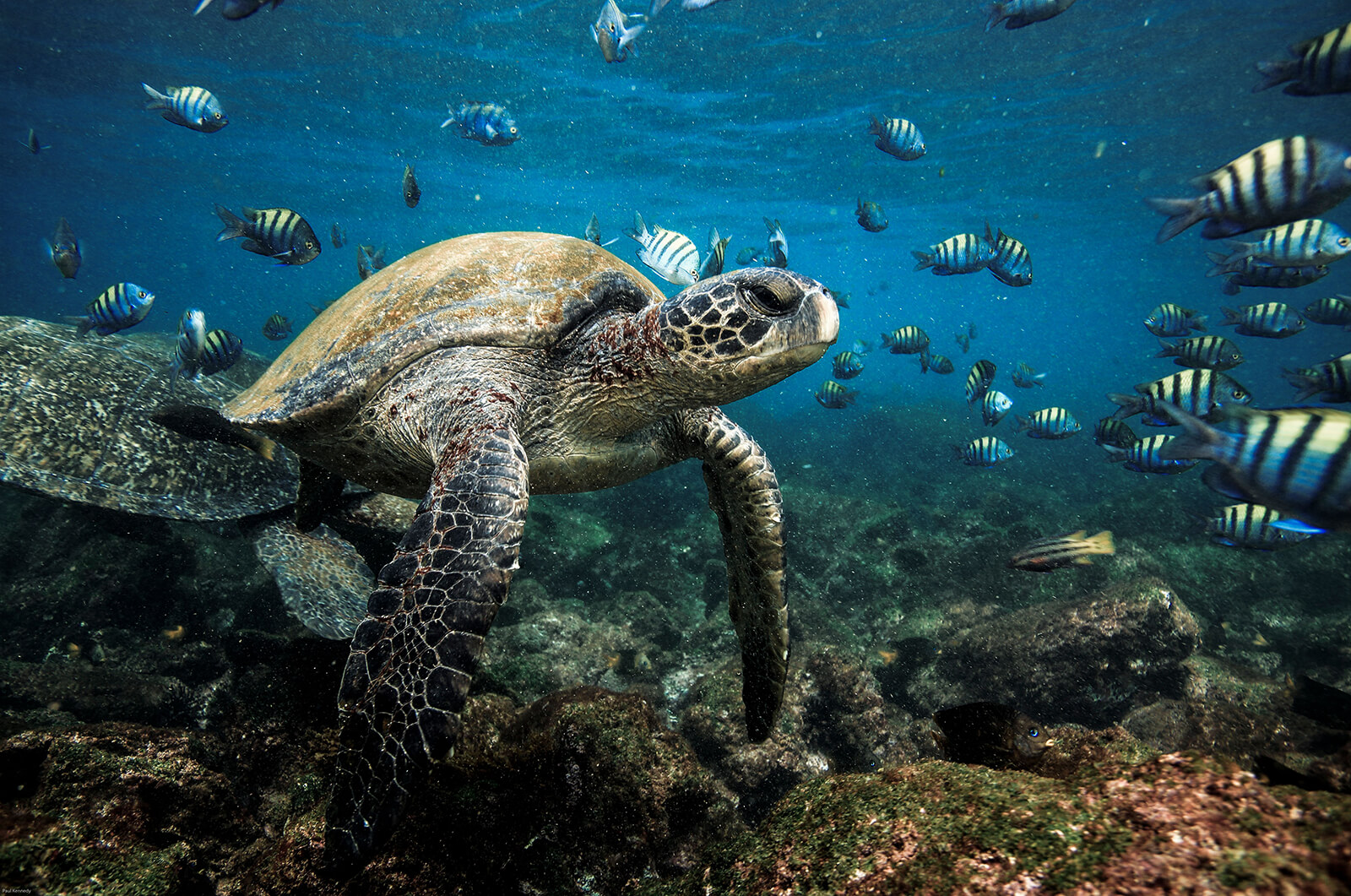 Small Ship Voyages Book Luxury Cruises with Silversea Cruises - experience wildlife